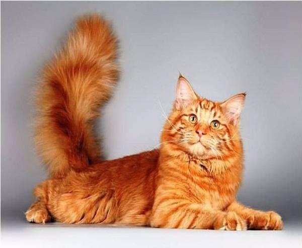 Сколько позвонков у кошки