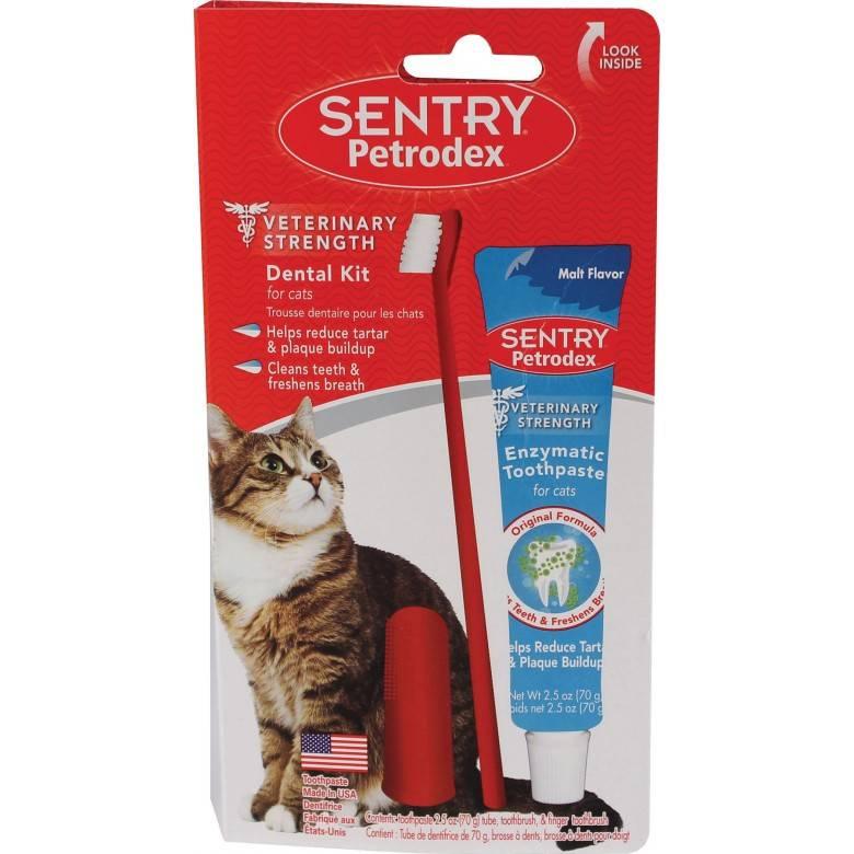 Какие требуются зубная паста и щетка для кошек, их цена и как часто нужно чистить зубы
