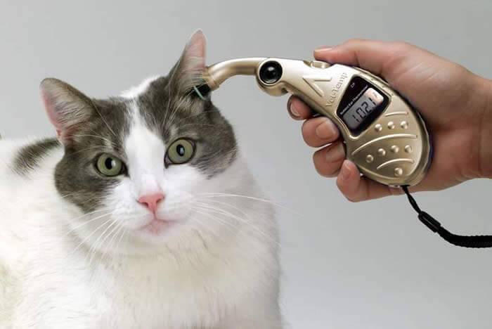 Как измерить температуру у кошки в домашних условиях?