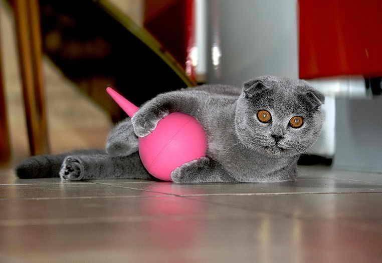 Как поставить клизму коту