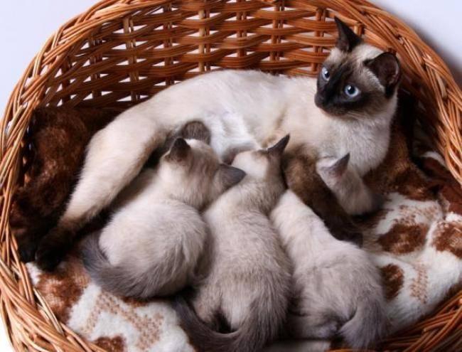 Как давать препарат Провера для кошек