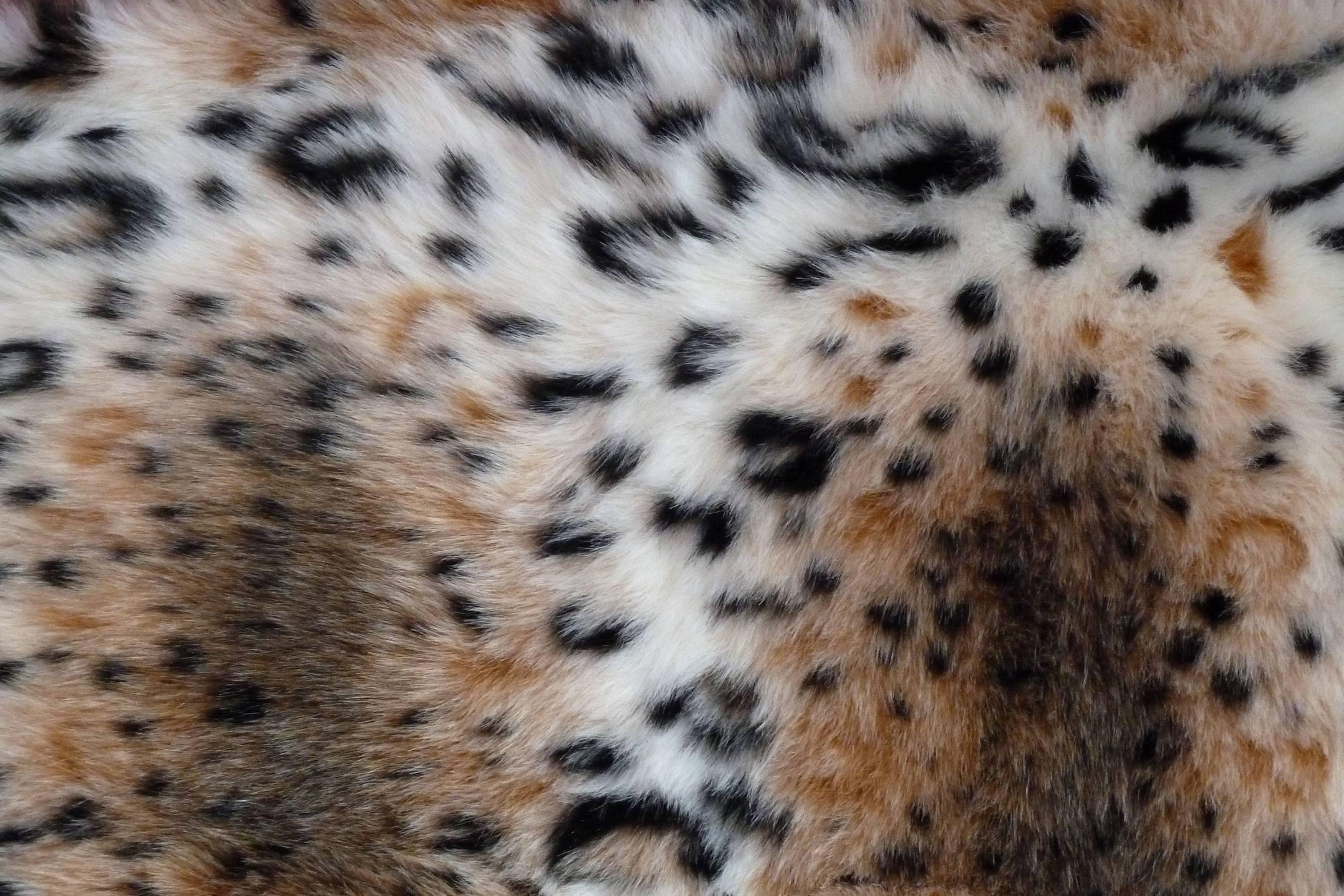 Подробное описание и образ жизни дикого лесного кота