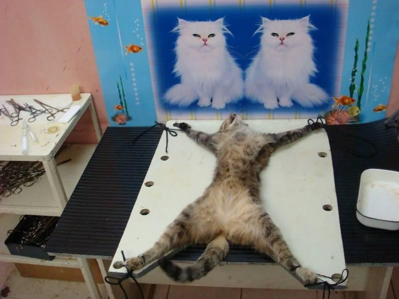 Кошка гуляет после стерилизации