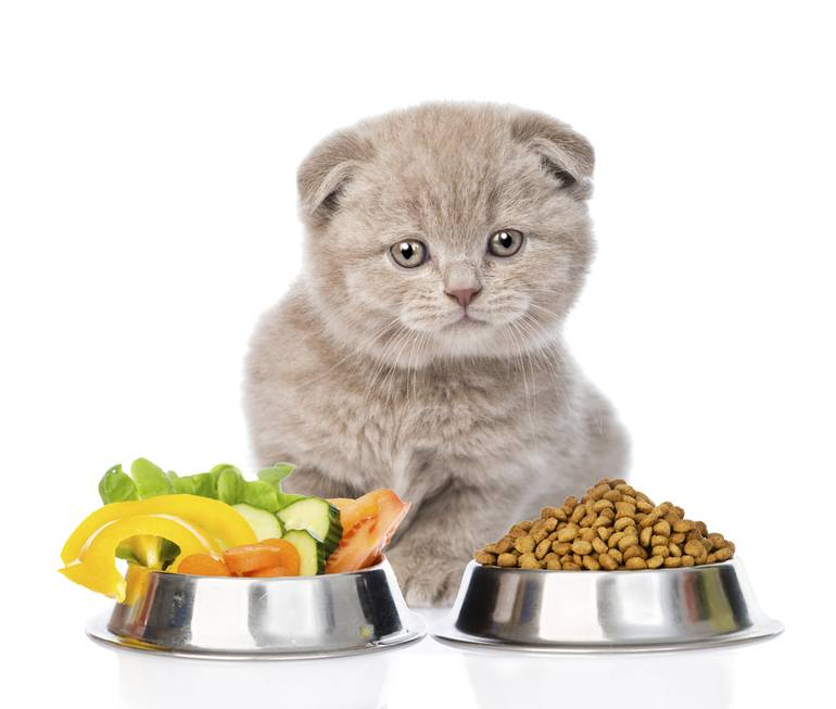 Рейтинг гипоаллергенных кормов для кошек