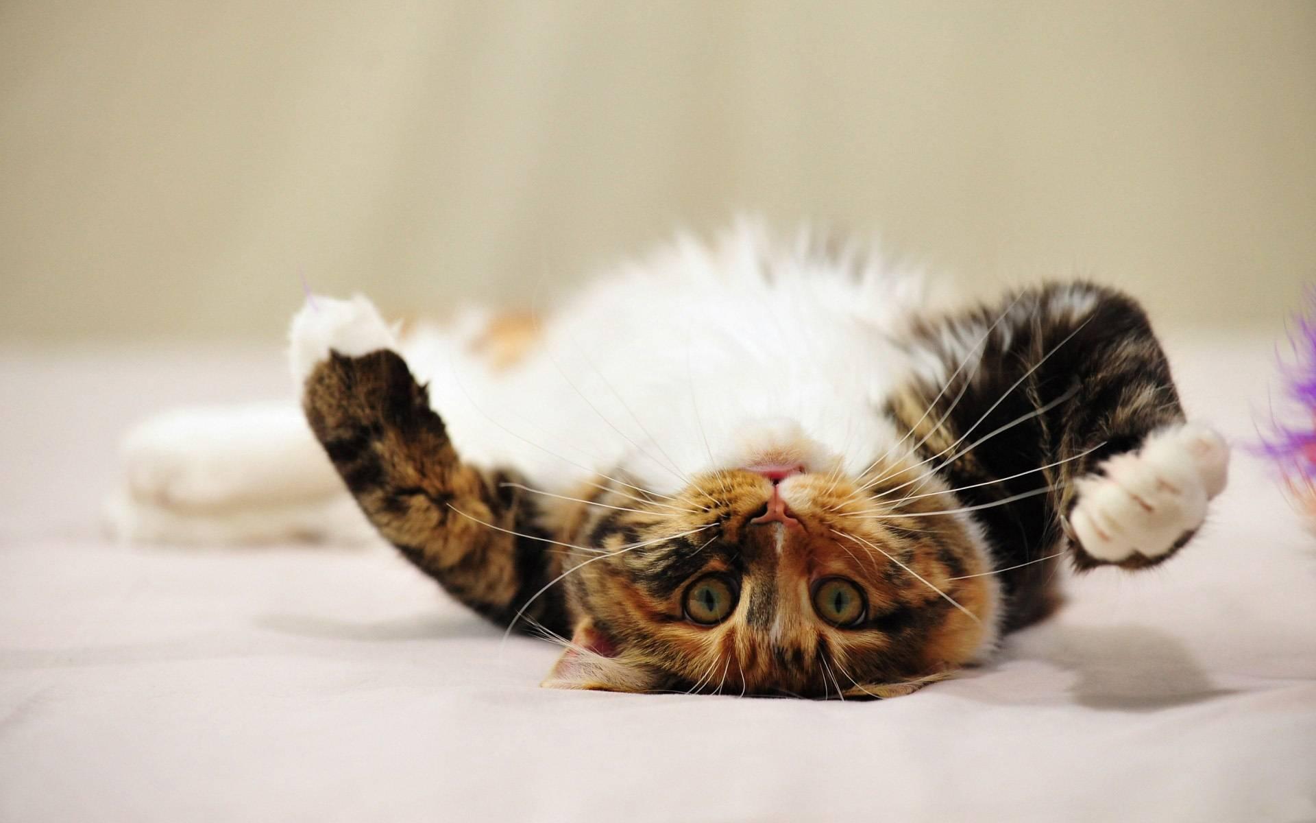 До какого возраста рожают кошки