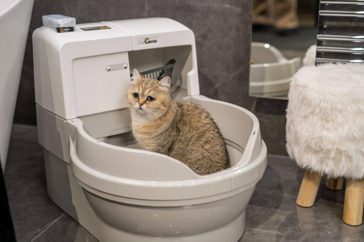 Лоток для кота и кошки с высокими бортами - Zverki.Click