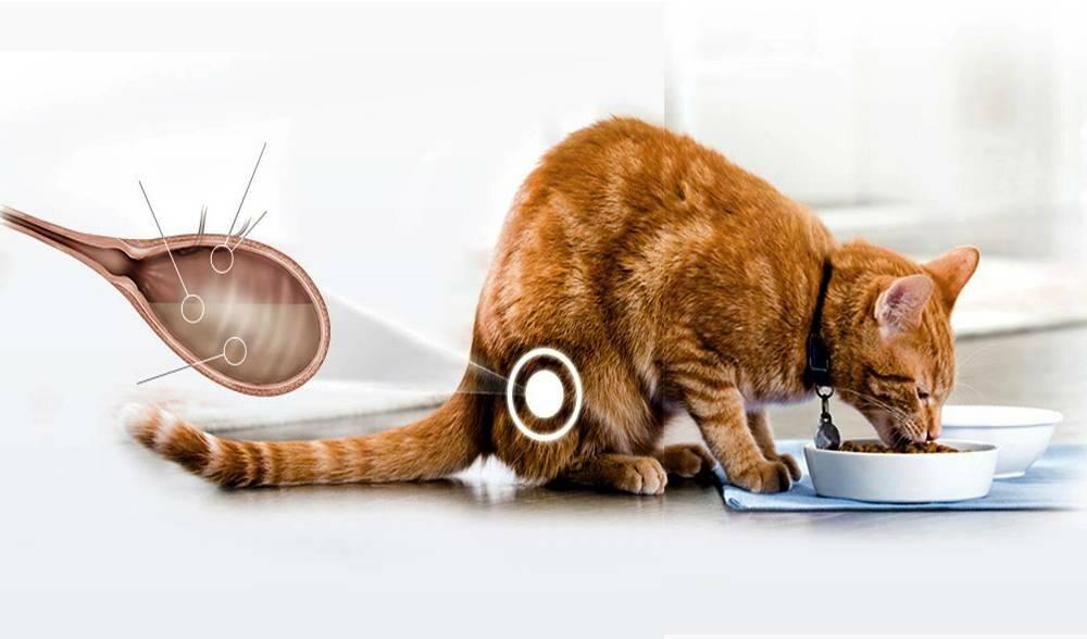 Канефрон при мочекаменной болезни у кошек