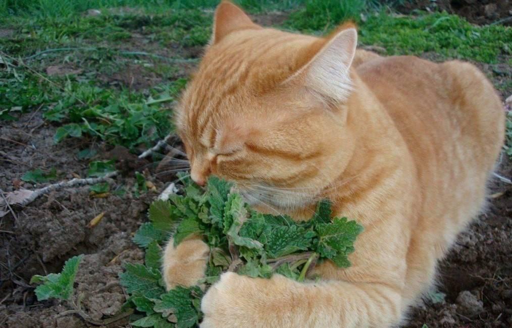 Факты о кошках которые ты не знал
