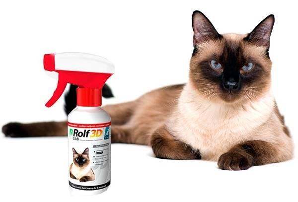 Передаются ли человеку кошачьи вши? Как выглядят и можно ли убрать? Как вывести вшей у котенка в домашних условиях
