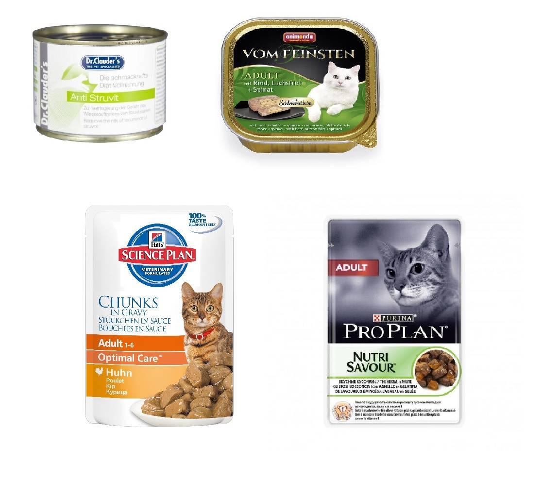 Обзор сухих и влажных кормов для стерилизованных кошек