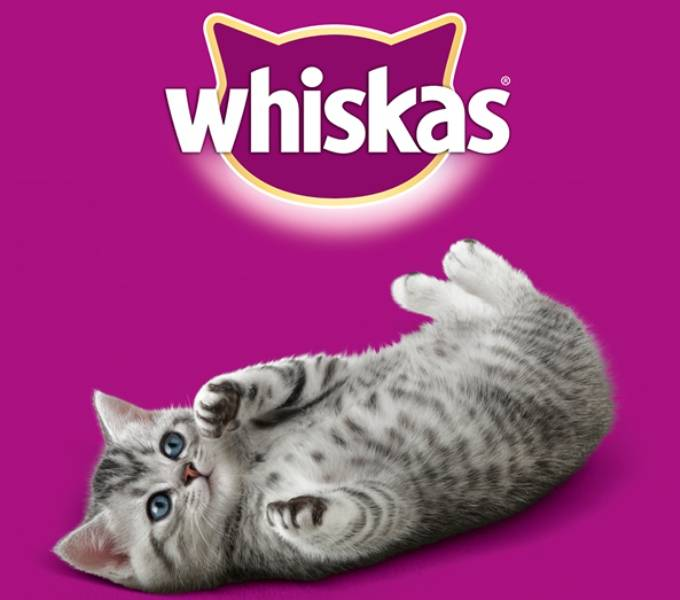 Корма для кошек вискас желе и рагу