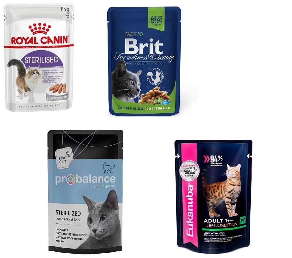 Рейтинг кормов для кошек мнение ветеринаров
