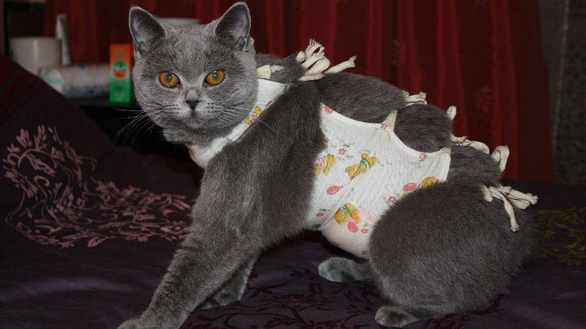 Во сколько кошка начинает рожать котят