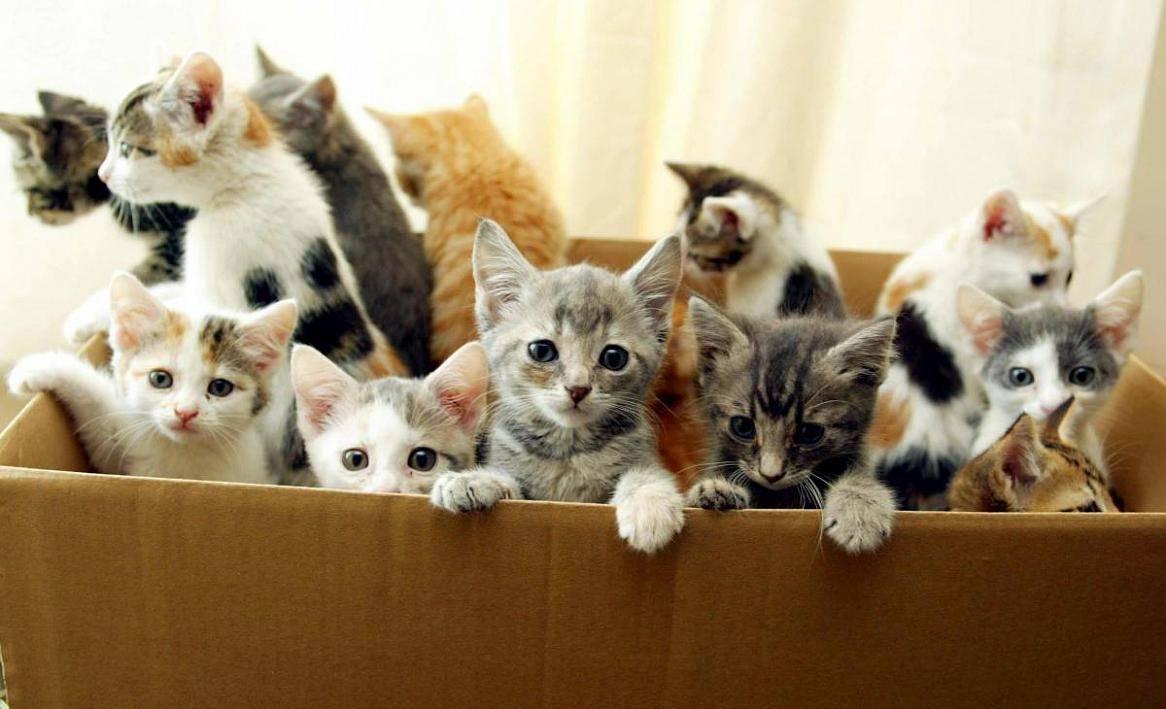 Сколько обычно котят у кошки thumbnail