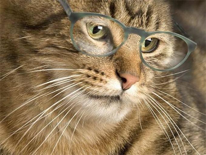 Корм для кошек перфект фит картинки