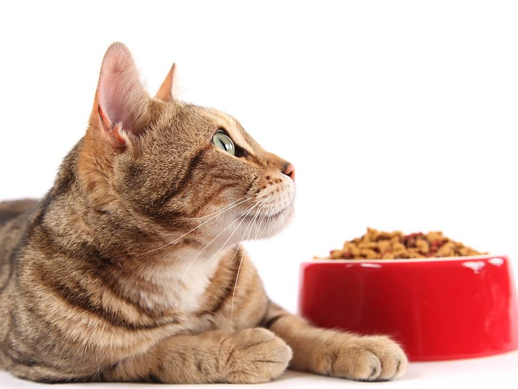 Виды и классы кормов для кошек, котов и котят