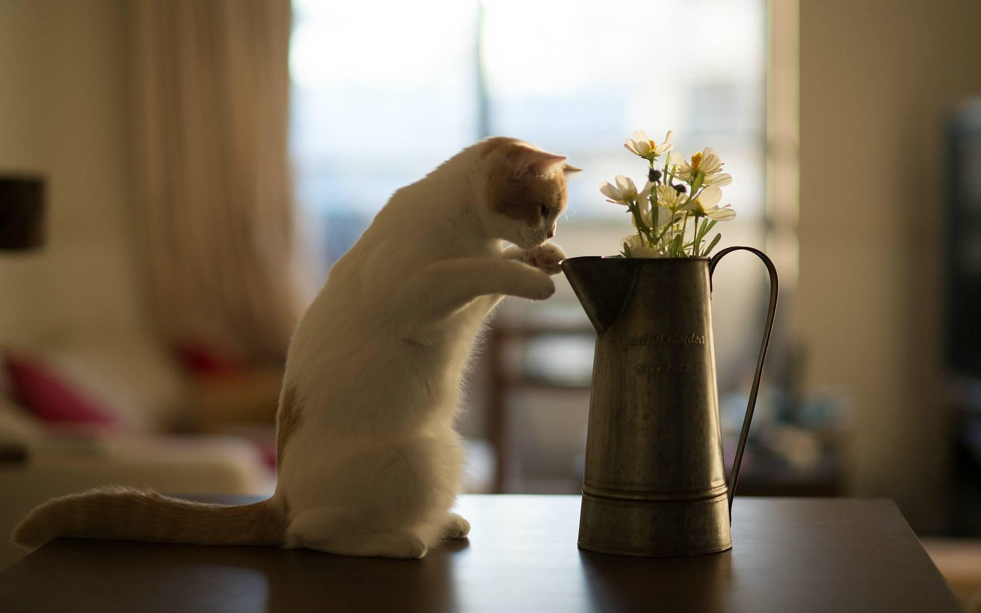 Способы отучить котов залезать и прыгать на стол: на кухонный и не только