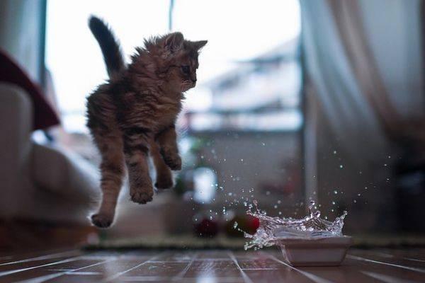 Почему кошки боятся воды но любят рыбу