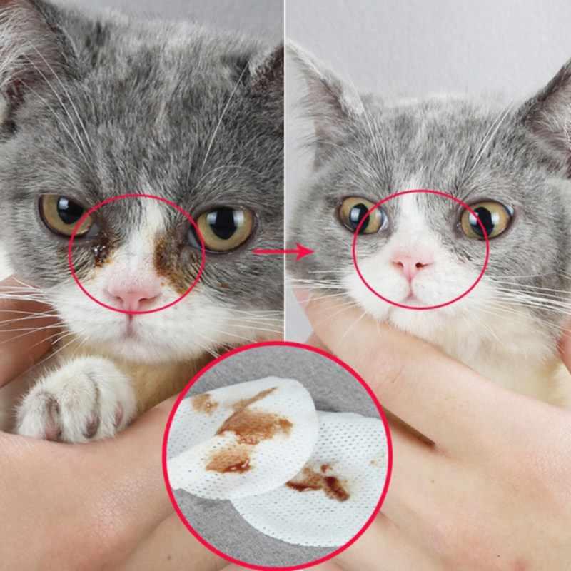 Как капать капли в глаза кошке