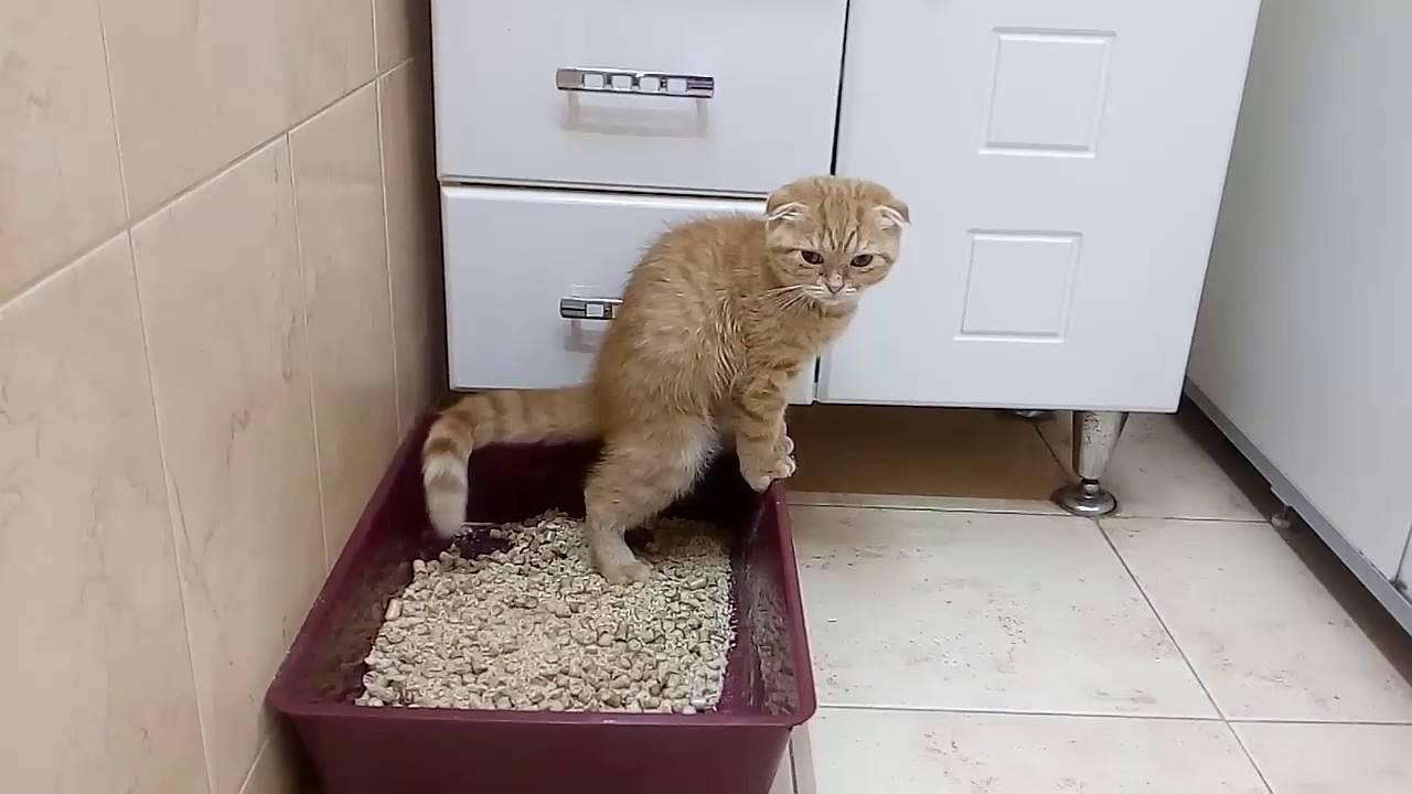 Кот писается после кастрации основные причины и методы лечения