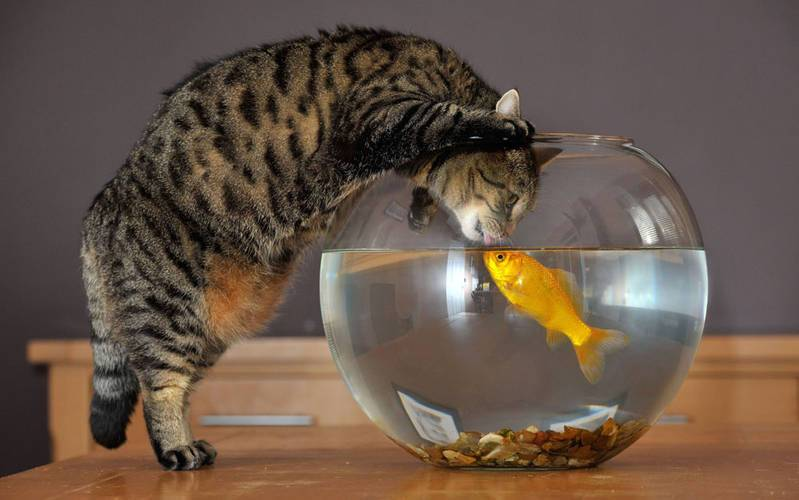 Можно ли кормить кошку рыбой