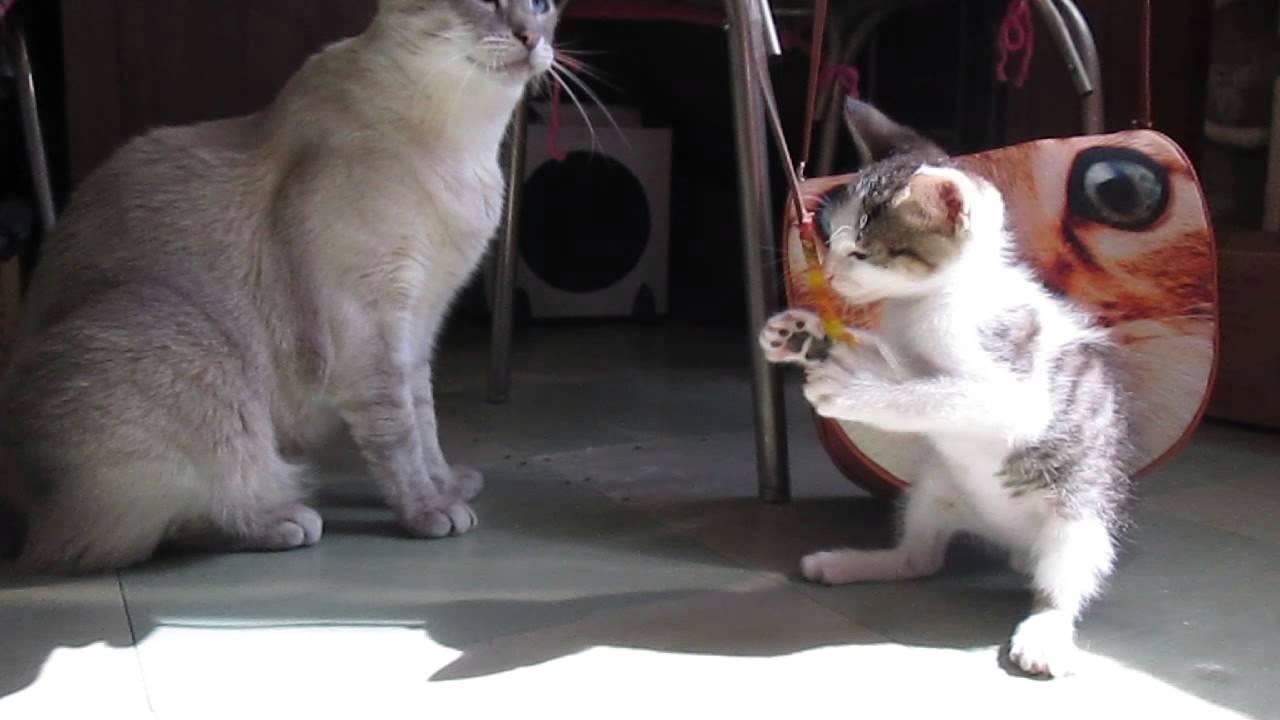 Кот и кошка живут в одной квартире