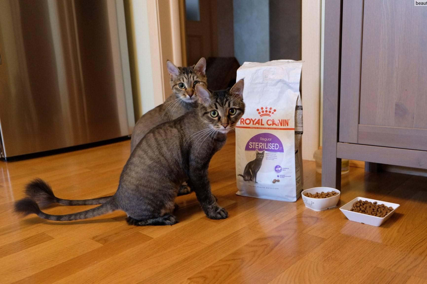 Чем кормить кошку в домашних условиях
