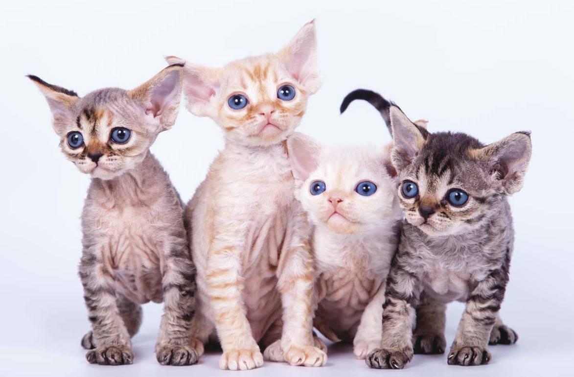 Гипоаллергенные домашние животные: как жить в гармонии с ними