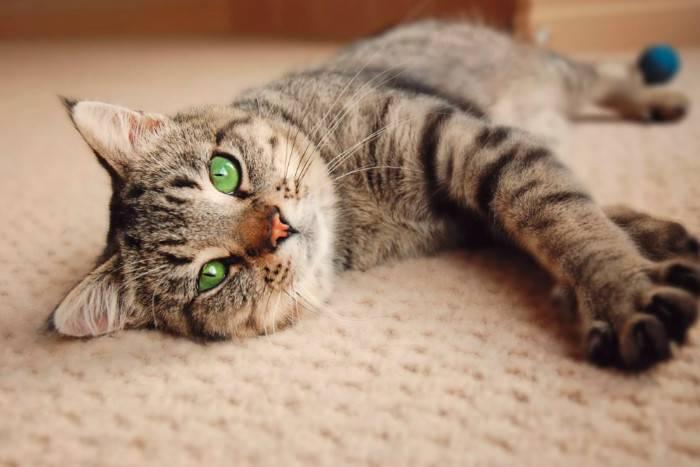 Отравление у кошки виды симптомы первая помощь