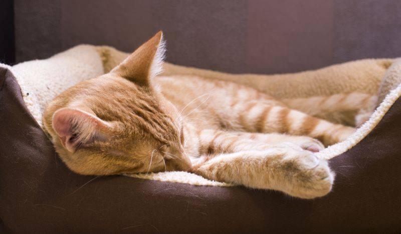 Что делать если кошка или кот ничего не ест