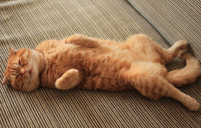 Примеры как погладить кота чтобы ему понравилось: как нельзя и где более приятно