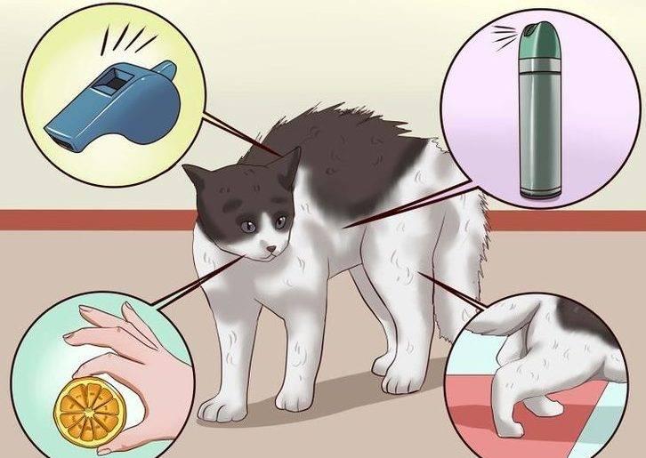 Как отучить кошку метить территорию