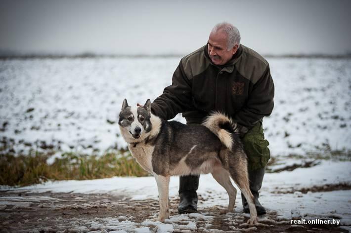 Воспитание щенка Карело-Финской Лайки