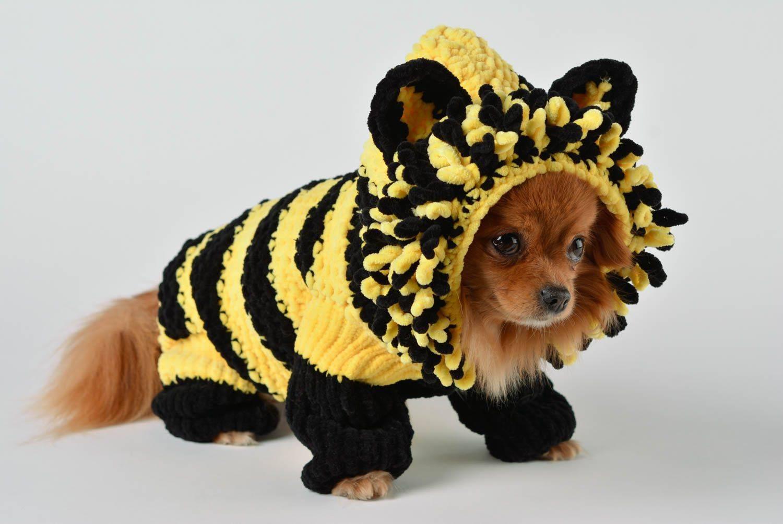 Вязание спицами комбинезона для маленькой собачки