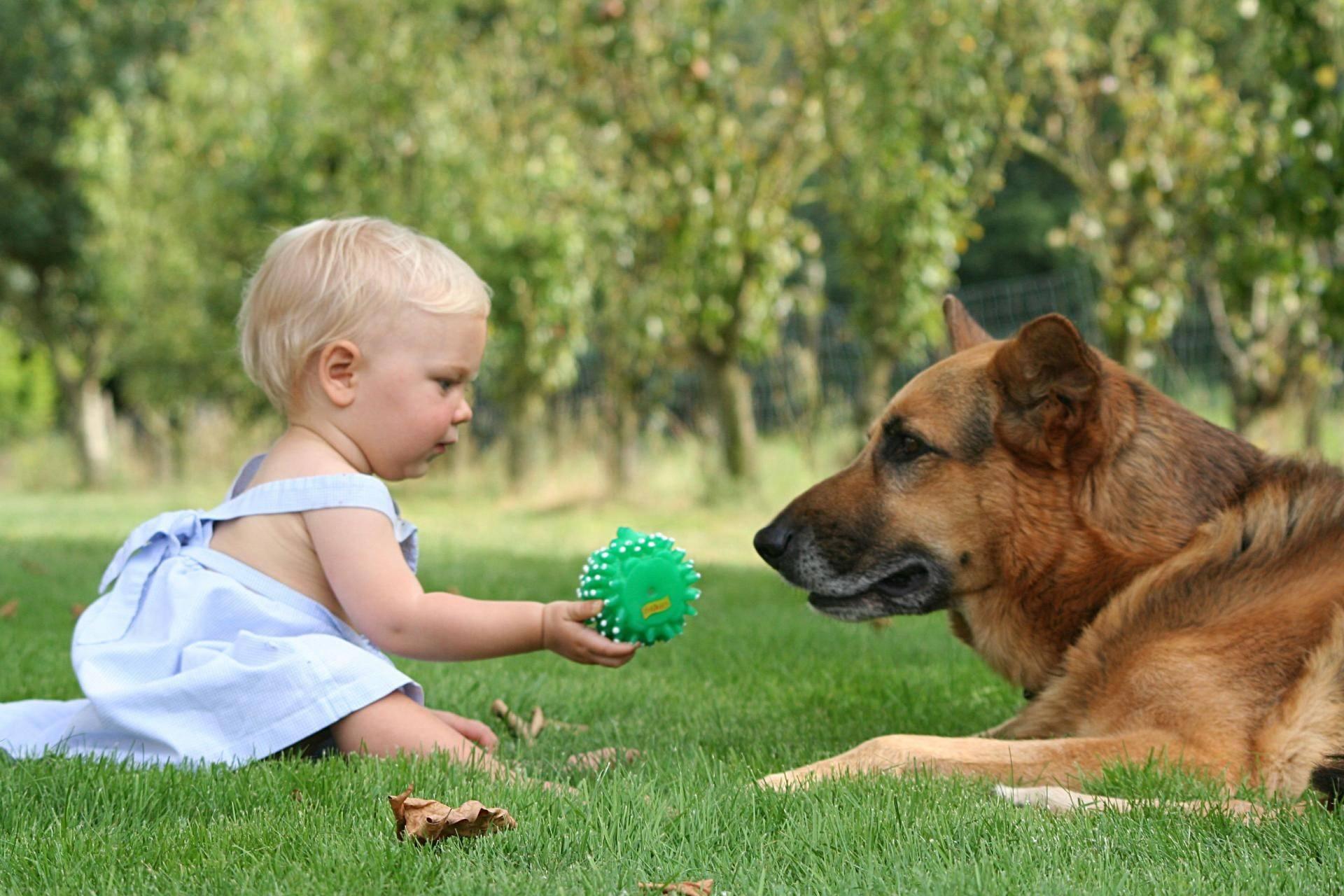 Собака для ребенка: лучшие породы для детей, рекомендации 1