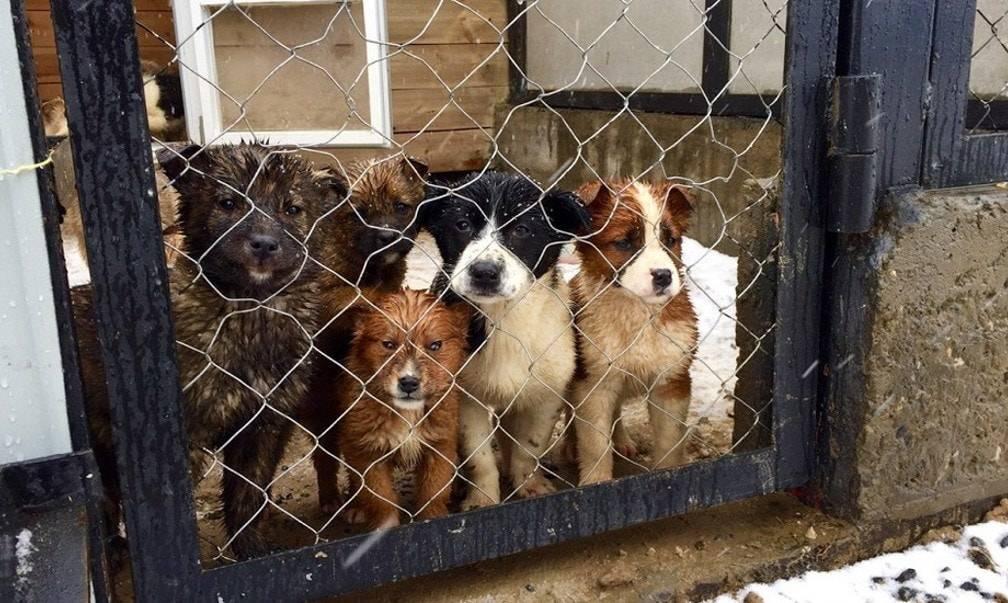 картинки с приюта для собак прокола позволяет украшать