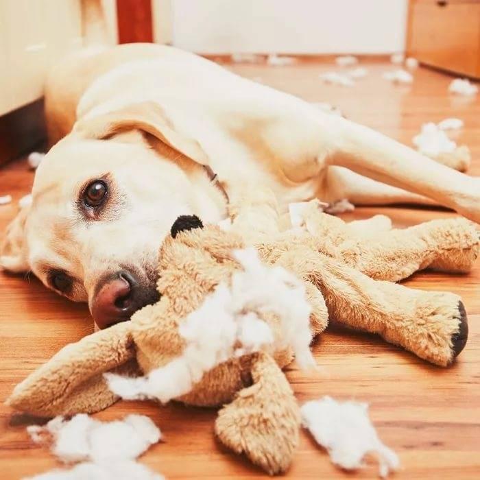 Собака грызущая картинки