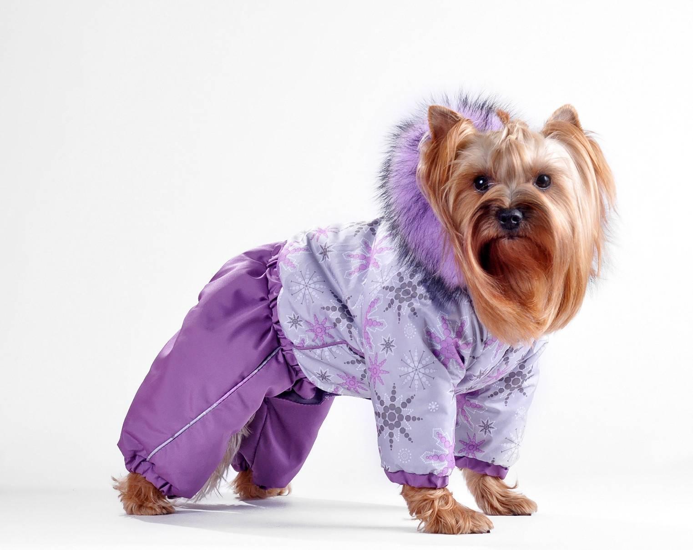 одежда для собак маленьких пород картинки будды как