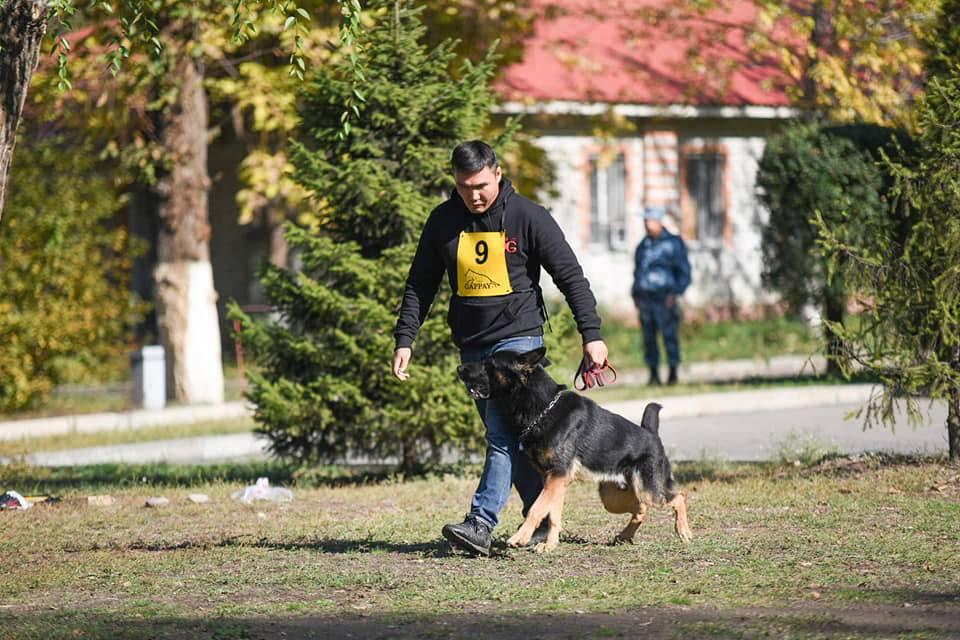 Где и как дрессировать собаку в домашних условиях 2