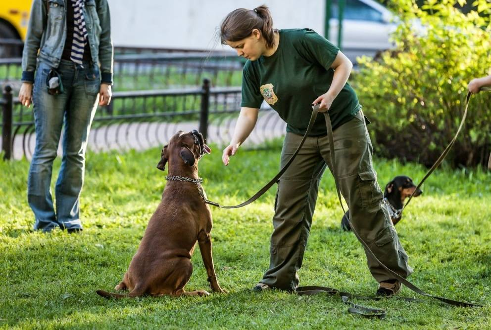 Где и как дрессировать собаку в домашних условиях 3