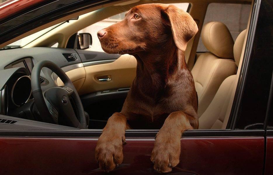 Картинки животных на машину