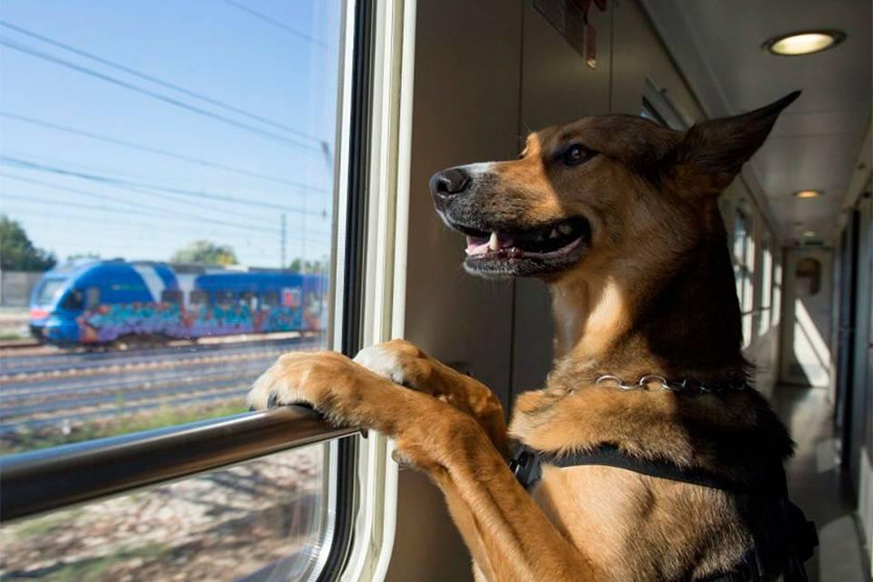 Правила перевозки животных в поездах РЖД в 2019-2020 годах