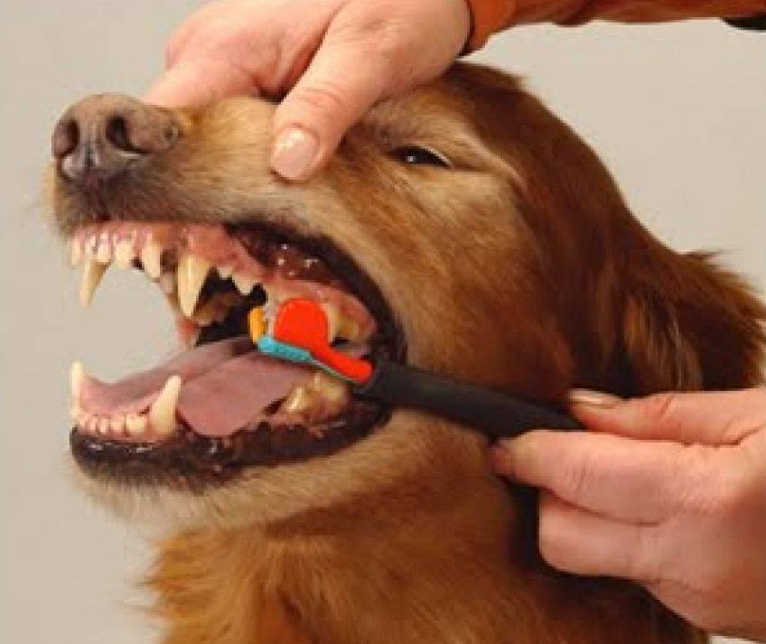 Зубная паста для кошек и собак