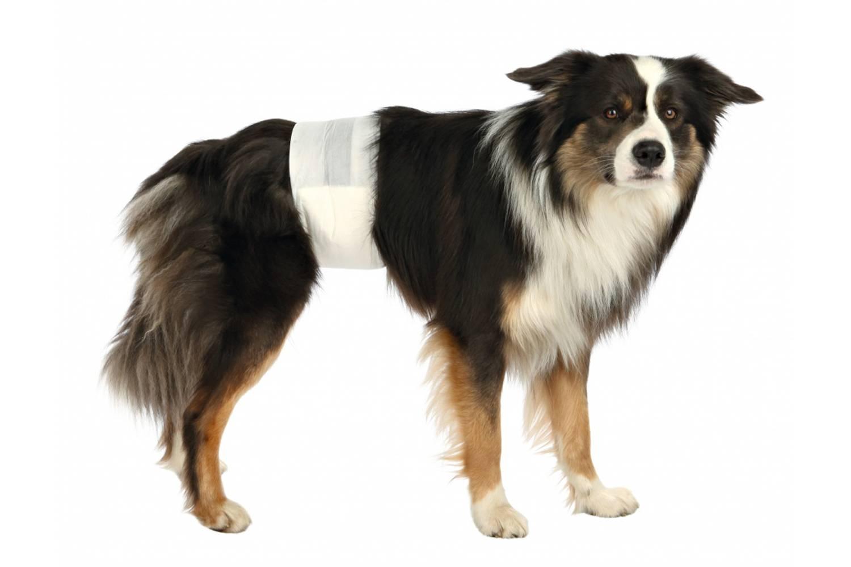 Памперсы для собак во время течки