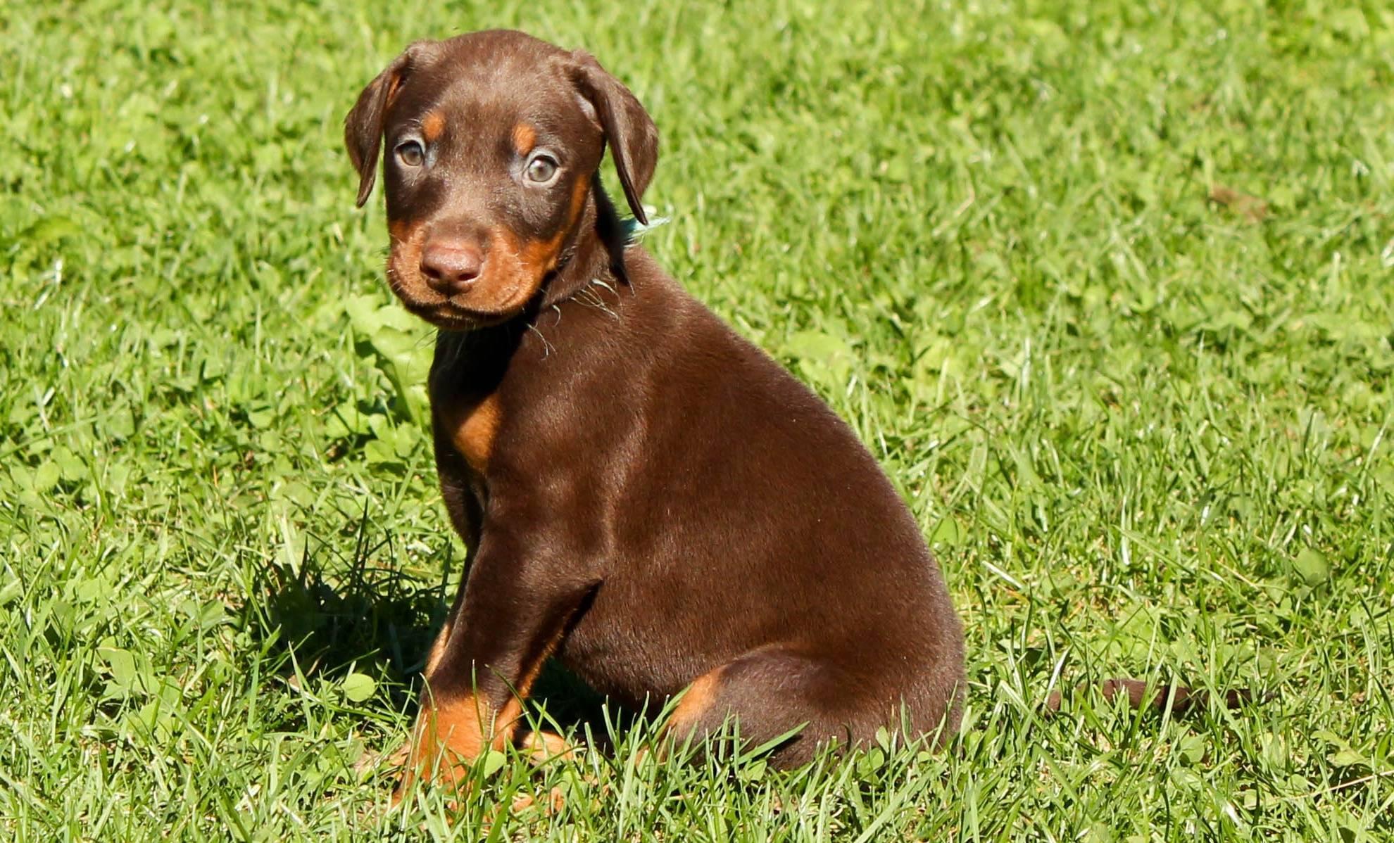 Как назвать маленького кобеля, прикольные клички для маленьких собак мальчиков породы шпиц