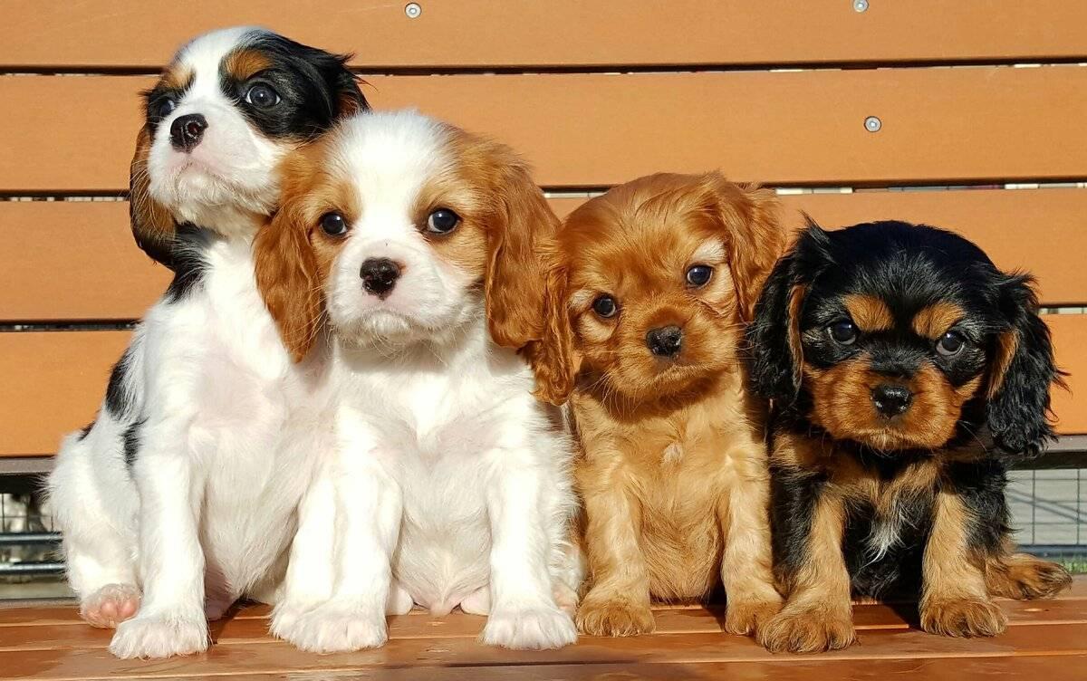 фальш-киль фото мелких пород собак и названия брендовая