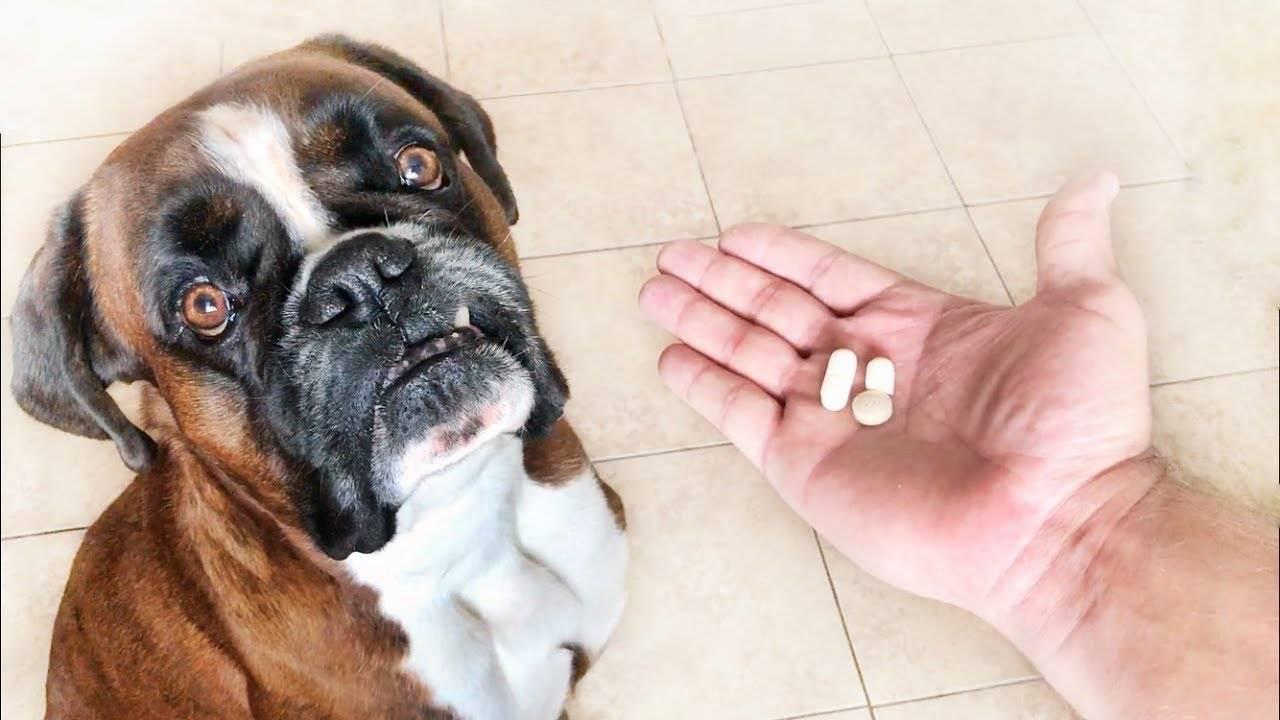 Таблетки от глистов для собак: какие лучше и как дать