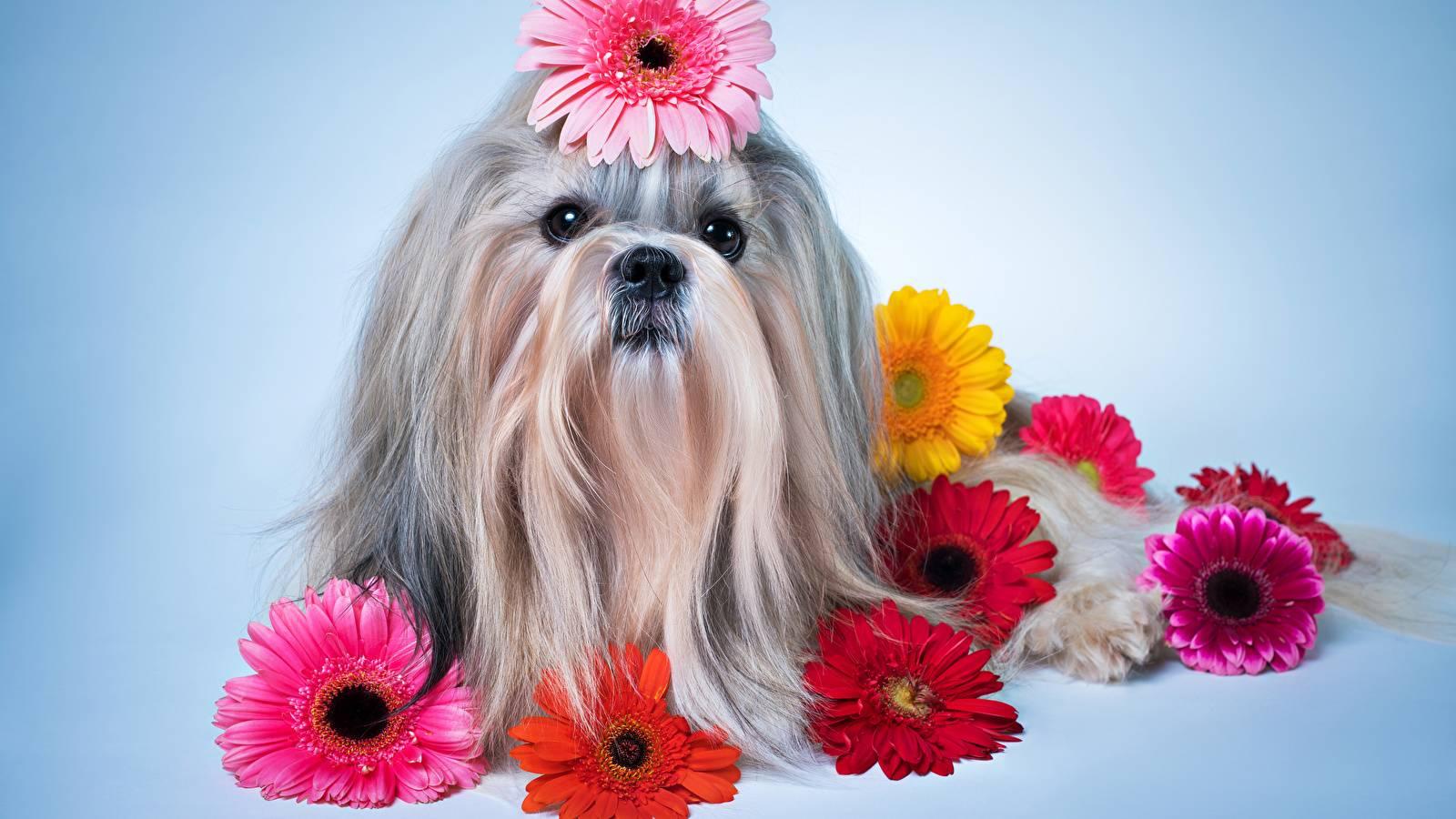 Перхоть у собаки причины и лечение. У собаки перхоть и выпадает шерсть