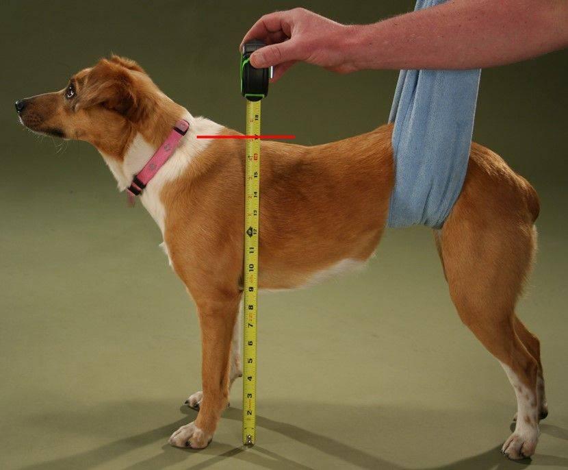 картинка измерения собаки том, что
