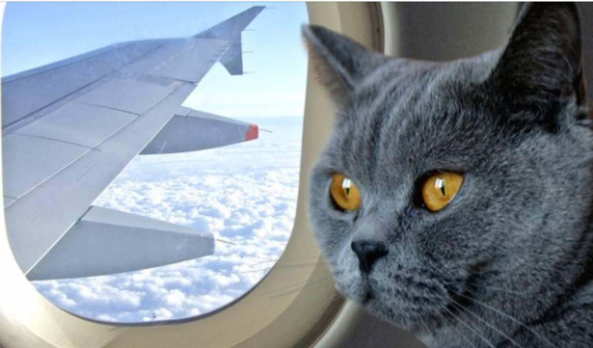 Какие переноски для кошек можно в самолет